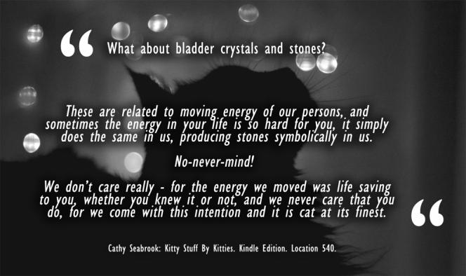 cat-bladder-stones