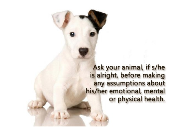 ask-your-animal