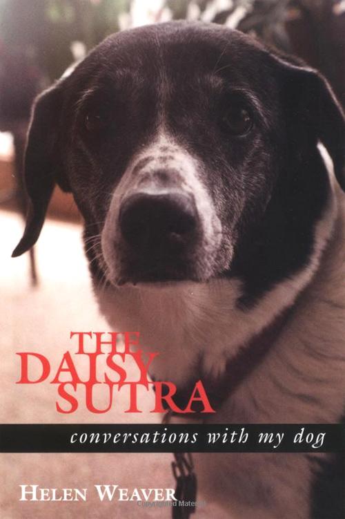 daisy-sutra