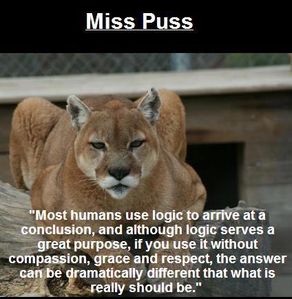 Miss-Puss
