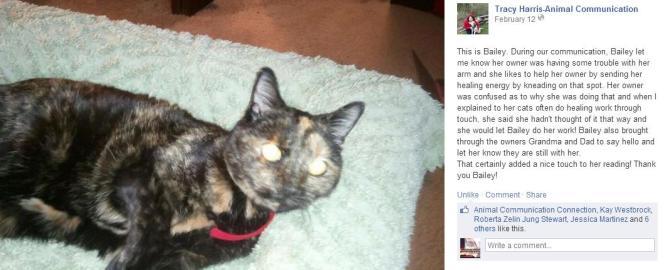 cat healer