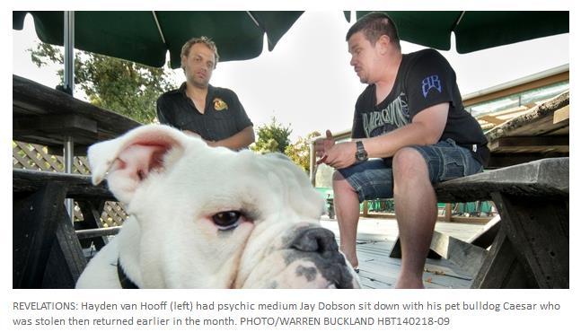 pet psychic bulldog