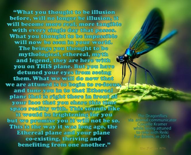 dragonflies speak while being attuned with reiki 2014