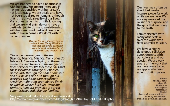 mission purpose feral cats via Nancy Windheart