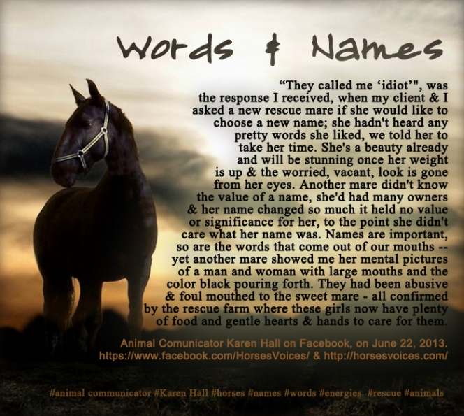 rescue-mares-speak-about-their-names-or-the-lack-of-them
