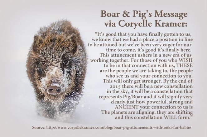 boar pig reiki attunement and message