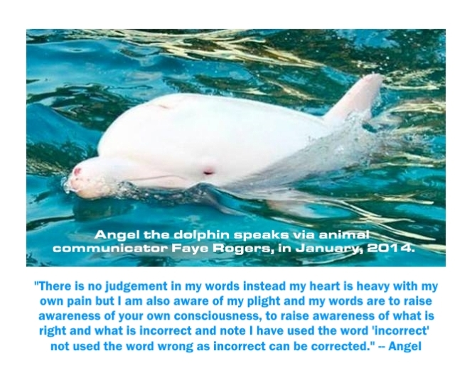 angel dolphins message via faye