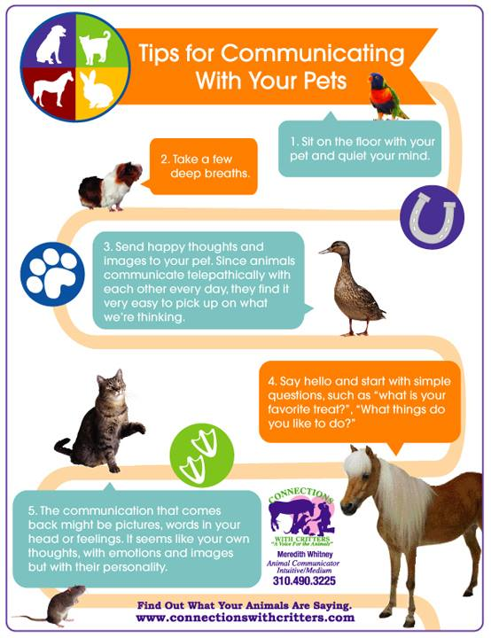 how to communicate with animals info
