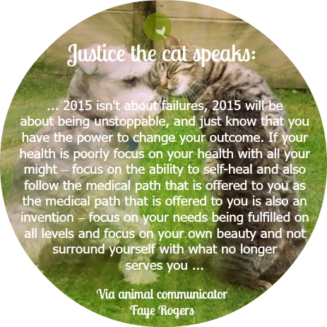 justice the cat speaks about 2015