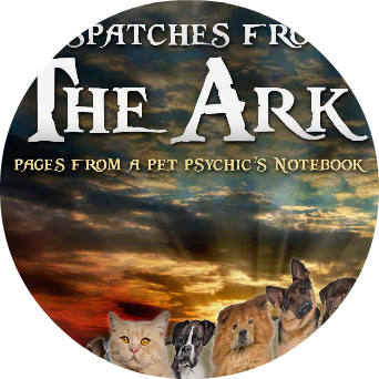 the ark cat chapter