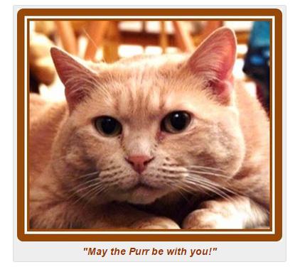 sakhara cat teachings