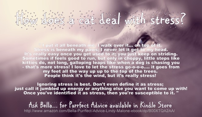 bella the cat talks feline wisdom