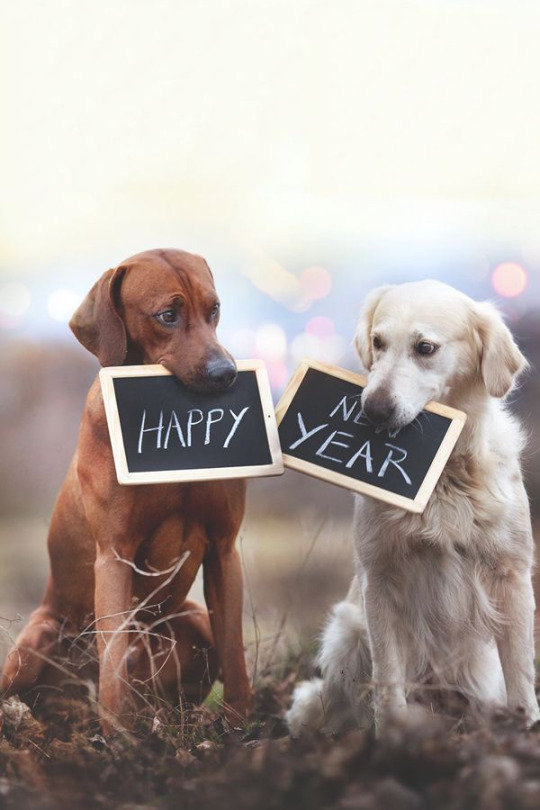 happy new doggy year