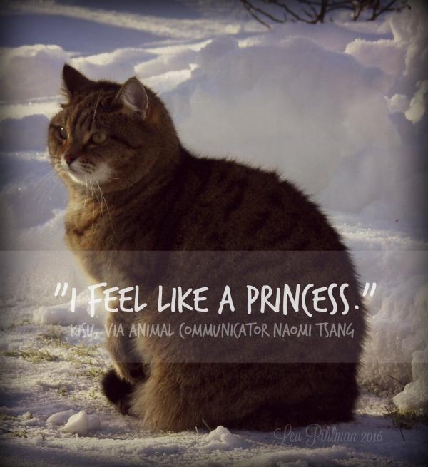 rescued princess cat called kisu