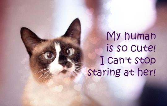 staring cat cute human